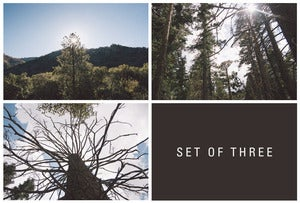 Image of sequoia, set of three. 