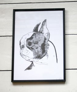 Image of Boston Terrier A4 Print