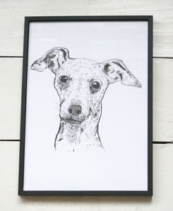 Image of Italian Greyhound A4 Print