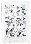 Image of Tea Towel - Bush Birds