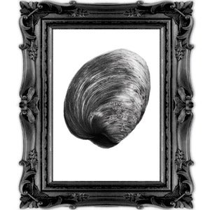Image of Quahog - Original Art