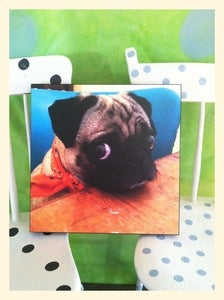Image of PHOTO PRINT: Saki in Bandana