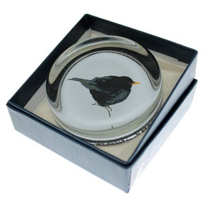 Image of Paperweight - Blackbird