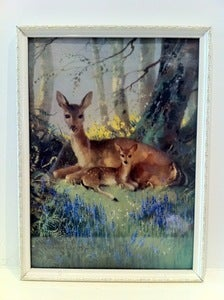 Image of VERNON WARD DEER PRINT