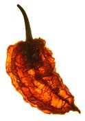 Image of World's Hottest Chilli