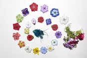 Image of Kamille's Handmade Flower Clips