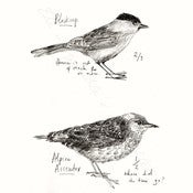 Image of Bird Watching Print - Blackcap & Alpine Accentor