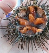 Image of Sea Urchin Caviar