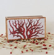 Image of Coral Matchbox