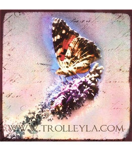 Image of ♥BUTTERFLY IN PINK♥