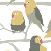 Image of lovebirds wallpaper