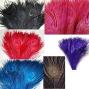 Image of Colored Peacock Feathers Pack of 10 (buy 5 packs get 1 free)