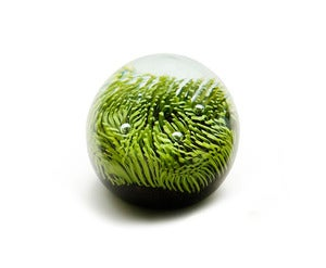 Image of Turf Paperweight