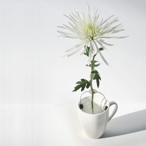 Image of POCKET VASE