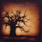 "Image of 12x12"" Panel Print - Horizon Series - Baobab Tree 2 Brown"