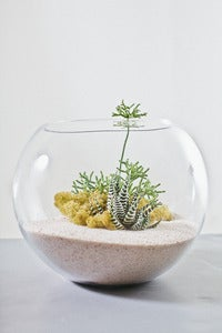 Image of Tranquility- White Desert Terrarium Kit Large