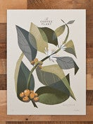 Image of The Coffee Plant (Branch) - Limited Edition (Sold Out)