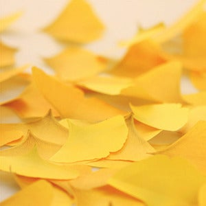 Image of  Appree Gingko Leaf Post-it