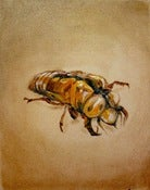 Image of Cicada Shell Study