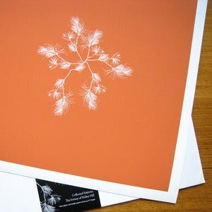Image of Giclée Prints (Orange)