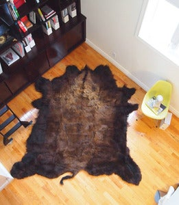 Image of X-Large North American Buffalo Hide