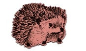 Image of Hedgehog junior