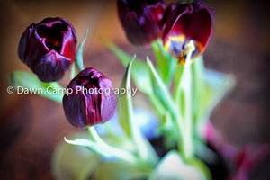 Image of Rich Tulips 16&quot; x 24&quot; Standout Professionally Printed on Metallic Paper