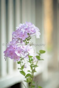 "Image of Dreamy Floral in 8"" x 12"" Standout Professionally Printed on Metallic Paper"