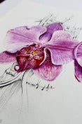 Image of Orchid Study 1 - original watercolour &amp; pencil 