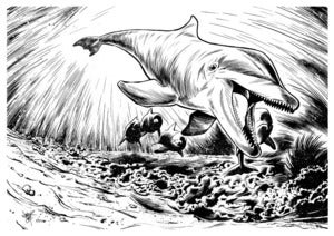 Image of Original: Tursiops Truncatus