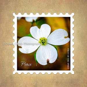 Image of Peace 10&quot; x 10&quot; Dogwood Blossom Stamp Motif Canvas from the Fruit of the Spirit Collection