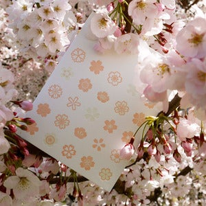 Image of sakura blossoms {pink}