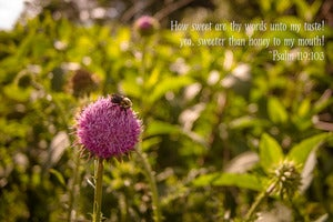 "Image of Bee {Psalm 119:103} 8"" x 12"" Standout Professionally Printed on Metallic Paper"