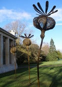 Image of Tom Hare's Poppy Seed Heads