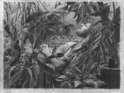 "Image of Bellows Print ""Self Portrait, Resting"" - large"