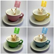 Image of Little Teacup Mouse