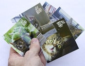 Image of Lil Bub Sticker Set