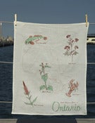 Image of Edible Invasive Species Of Ontario Teatowel