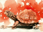 Image of (Daily Painting) Turtle