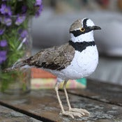 Image of LITTLE RINGED PLOVER