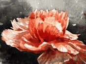 Image of (Daily Painting) Carnation