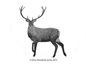 Image of Red Deer Stag - Limited Edition Linocut print