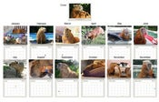 Image of 2013 Capybara Madness Calendar