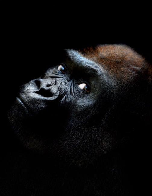 Imagenes increibles de animales increibles fotos de animales con fondo negro imagui - Videos animales salvajes apareandose ...