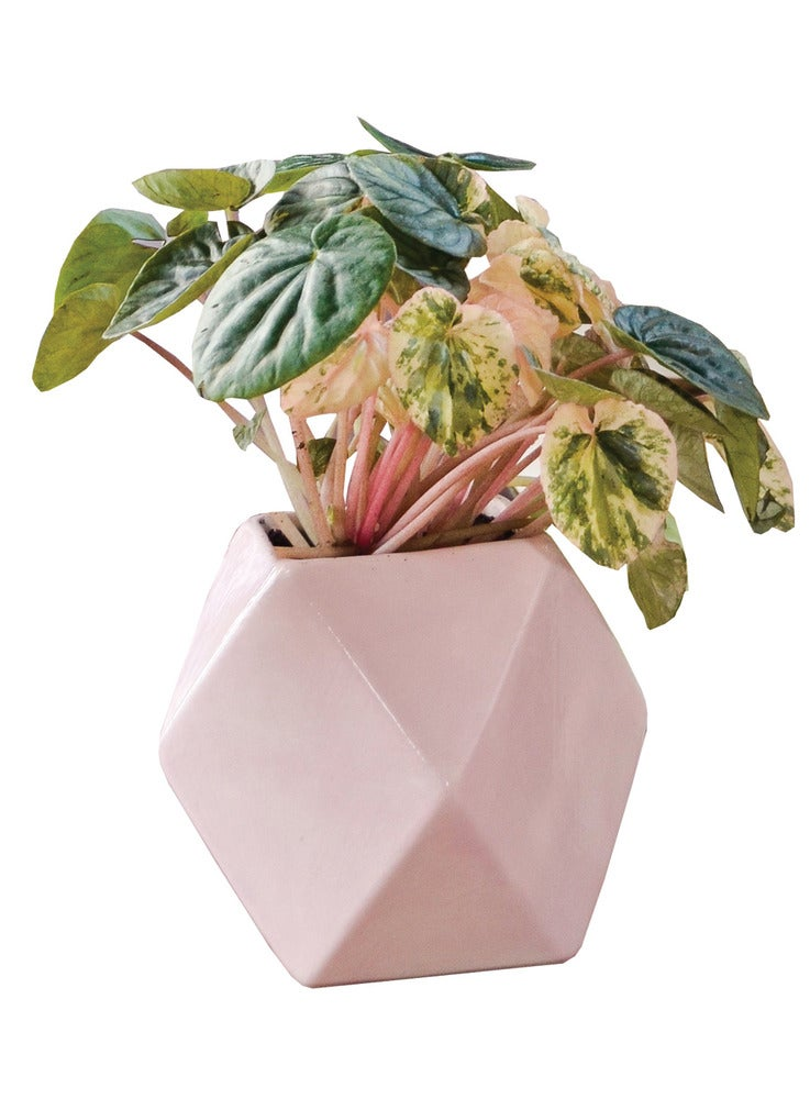 Image of GEM VESSEL PINK