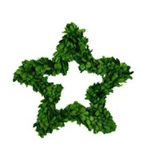 Image of Preserved Boxwood Wreath -- Star 12""