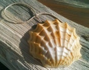 Image of Shell Soap on a Rope