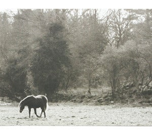 Image of postcard_horse