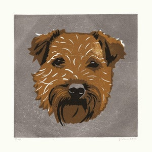 Image of BAXTER (Border Terrier)