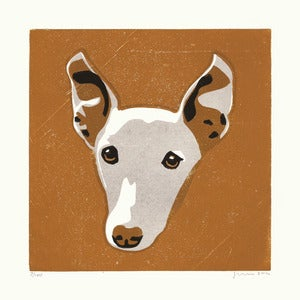 Image of FINN (Whippet)